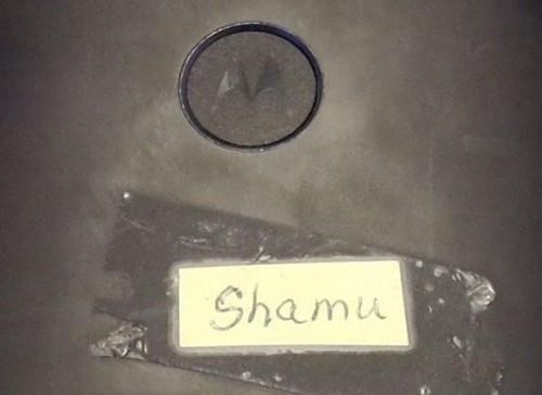shamu-mlogo